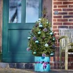 Little Santa Weihnachtsbäume im Topf
