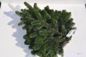 Tannenarten Weihnachtsbaum.Tannen Schnittgrün Direkt Vom Großhändler Großhandel Weihnachtsbäume