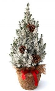Weihnachtsbaum Im Topf Geschmückt.Geschmückte Weihnachtsbäume Im Topf Zuckerhutfichten Vom Großhändler